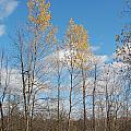 The Last Leaves by Valerie Kirkwood
