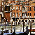 The Last Pigeon In Venice by Ira Shander
