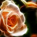The Last Rose Of Summer by Jordan Blackstone