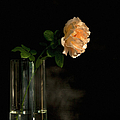 The Last Rose Of Summer by Theresa Tahara