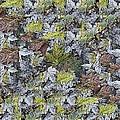 The Leaf Pile by Tim Allen