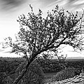 The Leaning Tree by Les McLuckie