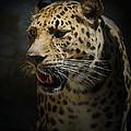 The Leopard by Ernie Echols