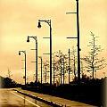 The Light Path by Linda Galok