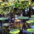 The Lily Pond by Anita Lewis