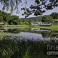 The Lily Pond by Arlene Carmel