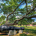 The Lincoln Gun by Jerry Gammon