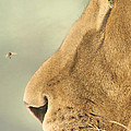 The Lion And The Fly by Carrie Ann Grippo-Pike