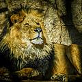 The Lion by Ernie Echols