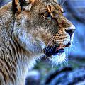 The Lioness Alert by Michael Frank Jr