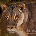 The Lioness  by Janice Pariza