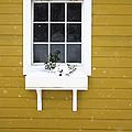 The Little Window by Lisa McLean Adams