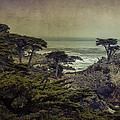 The Lone Cypress by Angela Stanton