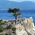 The Lone Cypress by Kiran Kapadia