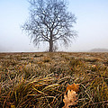 The Lone Oak by Davorin Mance