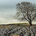 The Lonely Tree by Susan Leonard