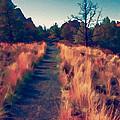 The Long Path by Bonnie Bruno