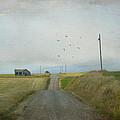 The Long Road Home by Juli Scalzi
