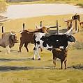 The Longhorn Cows by Derek Gollaher