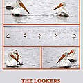 The Lookers by AJ  Schibig