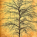 The Lord Jesus Is The Tree Of Life by Kathy Clark