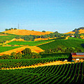 The Los Carneros District by Timothy Bulone