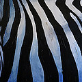 The Lost Zebra by Sean Parnell
