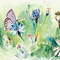 The Love Between Butterfly And Chicory by Tiberiu Soos