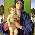 The Madonna Of The Trees by Giovanni Bellini