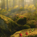 The Magic Forest by Veikko Suikkanen