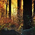 The Magic Of The Forest  by Saija  Lehtonen