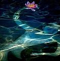 The Magical Pond by Gun Legler
