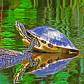The Magnificence Of Turtle by Lenore Senior