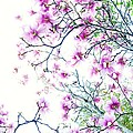 The Magnolia Fades by Cindy Rohde