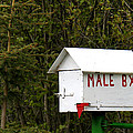 The Male Box by Art Block Collections