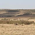 The Mara Plains by Sue Long