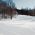 The Mccauley Mountain Ski Area by David Patterson