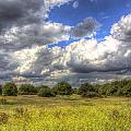 The Meadow by David Pyatt