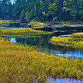 The Meandering Moose River - Old Forge New York by David Patterson