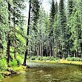 The Merced River  by Karen  Dempsey