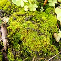 The Miniature World Of The Moss by Cynthia Woods