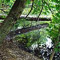 The Mirrored Tree by Deborah Fay