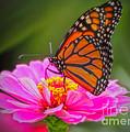 The Monarch's Flower by Elizabeth Winter