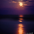 The Moon Is Just The Sun At Night by Mark Miller