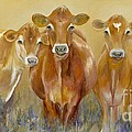 The Morning Moo by Catherine Davis
