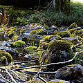 The Moss In The River Stones by Weston Westmoreland