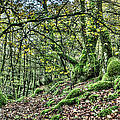 The Mossy Creatures Of The  Old Beech Forest 5 by Weston Westmoreland