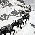 The Mule Pack by Frederic Remington