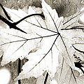 The Mysterious Leaf Abstract Bw by Andee Design
