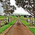 The Narrow Road by Julianne Baltrus